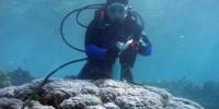 Dr Jennie Mallela taking a coral core skeleton sample.