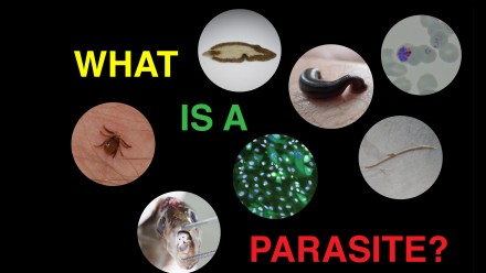 What is a parasite - pics