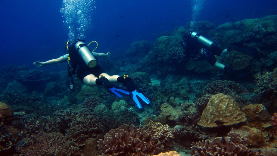 Researchers diving on a coral reef. Image: Jennie Mallela