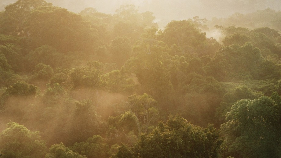 Rainforest canopy at dawn Image:Patrick Meir