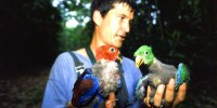 Robert Heinsohn with Eclectus parrot chicks (red female and green male)