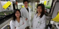 Dr Gonzalo Estavillo (rear) and fellow researchers in the plant growth room. Photo by Tim Wetherell.