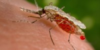 Alex Maier - the battle to beat the malaria parasite