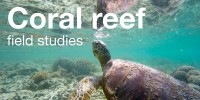 Coral Reef Field Studies