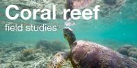 Coral Reef Field Studies