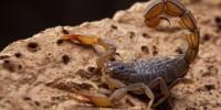 Scorpion. Photo by istockphoto